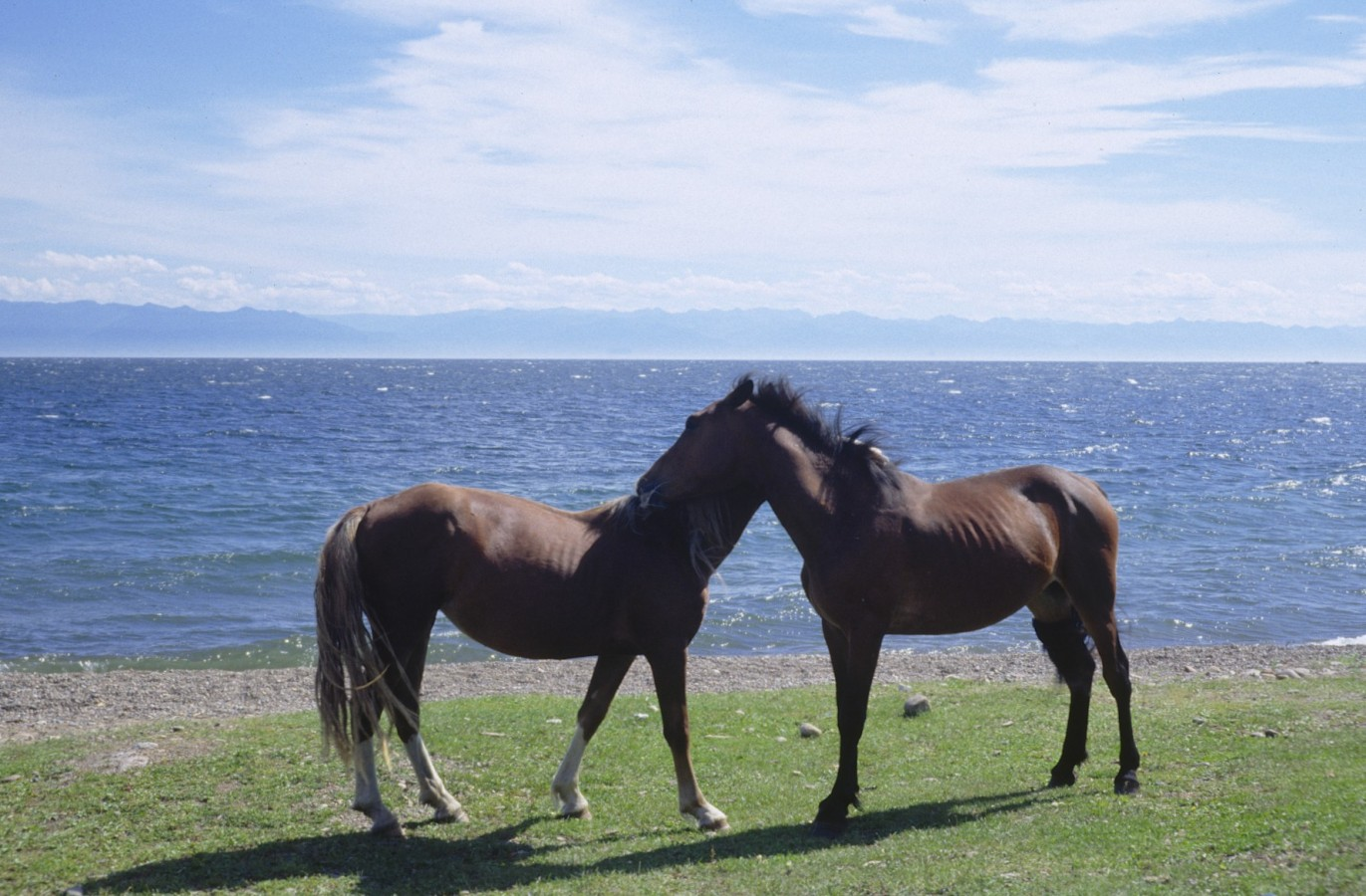 Horses posing in from of Lake Baikal
