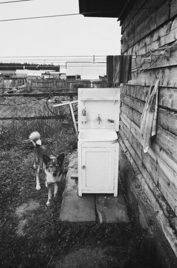 Local dog, Ohklon Island, Lake Baikal