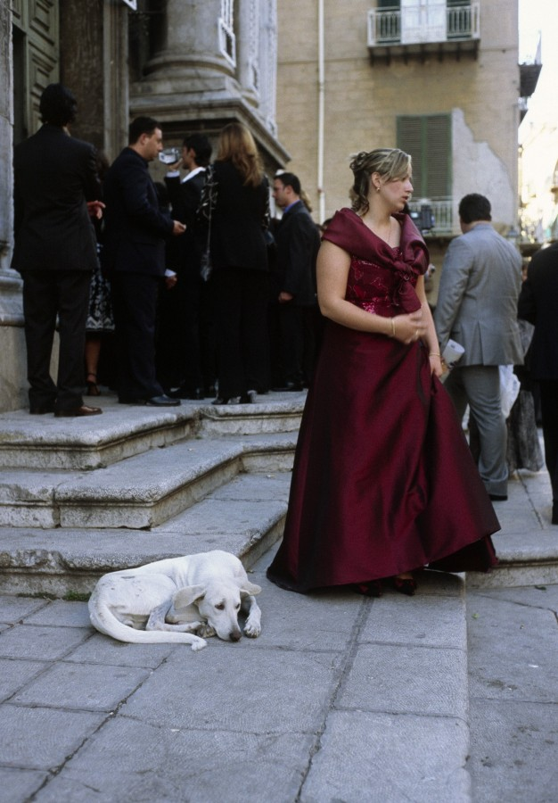 Dog, Italian wedding, Palermo